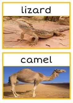 Desert animal information use to make desert animal cards