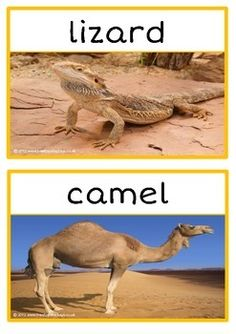 A set of 16 printables showing photographs of a range of desert animals. Fantastic for discussion and as a display! Will get the students talking about this topic! Visit our TpT store for more information and for other classroom display resources by clicking on the provided links.