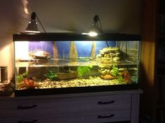 Aquarium Inspiration, Red Ear Slider Turtle Tank, Red Eared Slider Tank, Claire S Turtle, Turtle Tanks, 960 720 Pixels, Earred Slider, 600 450 Pixels, ...
