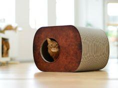 CAT-ON Ontdek de grote Brochhaus Junior