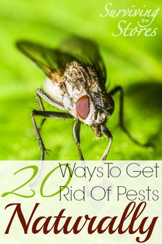 How to get rid of pests naturally! Here are 20 different NATURAL ways to keep those pesky bugs under control!