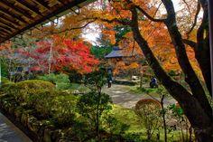 https://flic.kr/p/N3uoKq | Saimyō-ji, Autumn 2014, Kyoto. | Autumn colours in the courtyard of Saimyō-ji (西明寺) in Ukyō-ku, Kyoto City.