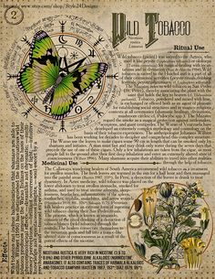 Wild Tobacco (Turkish Tobacco) Book of Shadows page, Ritual Poisonous Plants – Candle Making Wiccan Magic, Wiccan Spells, Magick, Herbal Magic, Poisonous Plants, 12th Book, Vintage Witch, Kitchen Witch, Book Of Shadows