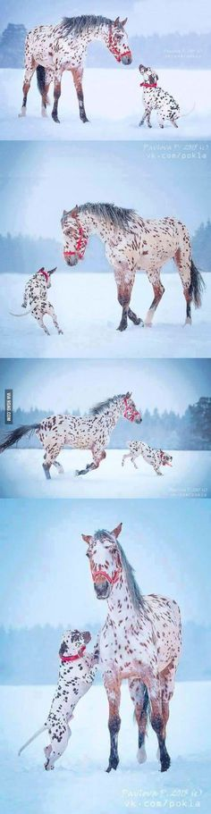 Brother from another mother, Spotted horse and dog playing in the snow - 9GAG