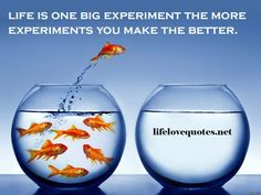 Life Love Quotes-Life Experiment