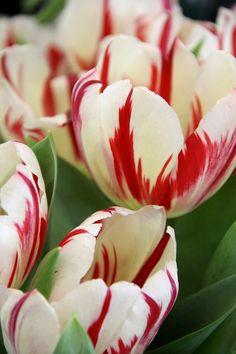 Las mejores fotos de flores gratis que podras utilizar para tus creaciones   Las mejores fotos de flores gratis que podras utilizar para tus creaciones  Una web tarjeta de felicitación documento carta son todas ocasiones muy especiales y alegres que se acompañan del aroma y de la belleza del mundo de la flor. Flores bonitas como la rosa el jacinto el tulipán la hortensia la cala el lirio la margarita la orquídeaDiferentes tipos de flores con las cuales podremos enviar mensajes determinados a…