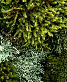 53903 moss and lichen | Fred Michel | Flickr