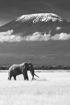 Our #Kilimanjaro picture of the day! #Travel #TTOT #Climbing #Trekking #Adventure #Mountain #Tanzania