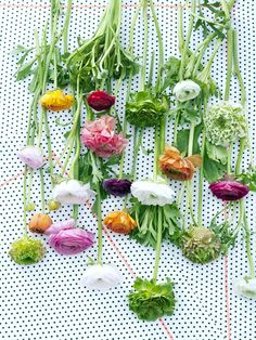 she is not a wall flower, but she enjoys hanging flowers on walls Colorful Flowers, Spring Flowers, Beautiful Flowers, Deco Floral, Hanging Flowers, Flower Images, Blossom Flower, Ranunculus, Flower Wall