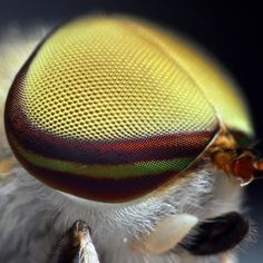 Photographer Thomas Shahan takes close up macro images of the eyes of insects. Most Beautiful Animals, Beautiful Images, Beautiful Bugs, Primates, Insect Eyes, Macro And Micro, Horse Fly, Fotografia Macro, A Bug's Life