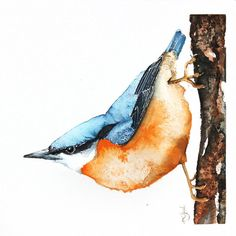 ARTFINDER: Nuthatch-Original watercolors painting by Karolina Kijak -  Original watercolors of Nuthatch Paper 300g  100% cotton, high quality pigments size 18x18cm  Follow me on facebook: https://www.facebook.com/kijakwater...