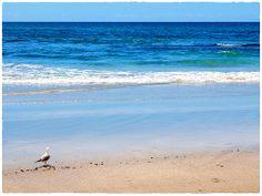 This seagull enjoys long walks on the beach | Elliot Bay, New Zealand