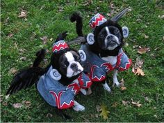 Boston Terriers dressed up as flying monkeys from The Wizard of Oz