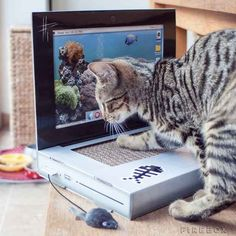 And for a tech-loving kitty, here's a cat scratch laptop ($30).