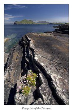 Valentia Island, Kerry, Ireland Copyright: Stephen Emerson