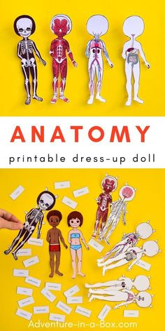 Study the human body anatomy with kids by making a set of printable anatomy paper dolls, with each layer showcasing a different body system! human body system Anatomy Printable Paper Doll for Kids Kid Science, Science Crafts, Teaching Science, Science Activities, Teaching Kids, Kids Learning, Activities For Kids, Science Ideas, Preschool Science