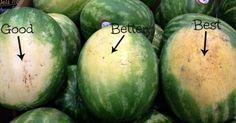 You may think that choosing a great watermelon is up to chance, but there are actually several ways to spot the perfect watermelon. Image Credits: Reddit