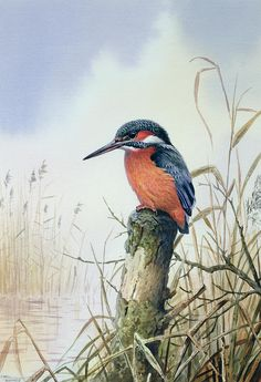 Kingfisher Painting by Carl Donner - Kingfisher Fine Art Prints and Posters for Sale