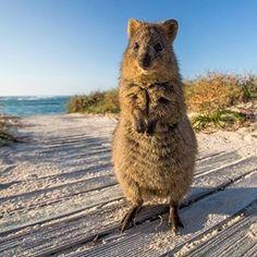Neither will this one. Those li'l paws! | 21 Photos That Prove Aussie Animals Aren't All Batshit Insane