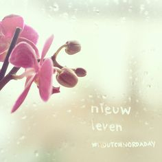 #adutchwordaday {day 363} Nieuw leven - New life adutchwordaday.tumblr.com