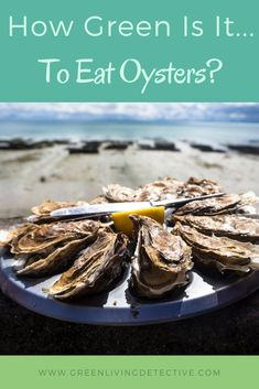 Essentially oysters are little environmental scrubbers. Each one can filter up to 50 gallons of water a day, removing nitrogen and phosphorous. Plus, both farmed and wild oysters sequester nitrogen and CO2 from the atmosphere. So, they must be a sustainable food, right? Follow the link to find out the truth about eating oysters. >>>> #oysters #sustainablefood #saveouroceans #environment #sustainability #greenliving #food Raw Oysters, Sustainable Food, Sustainable Living, Peanut Butter Jar, Save Our Oceans, Green Products, Super Greens, Eating Raw