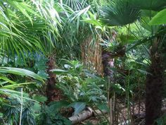 Exotic Garden in October from Alternative Eden. dramatic palms, bamboos and other exotic plants.