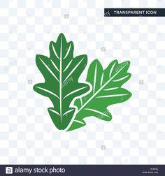 Kuvahaun tulos haulle OAK LEAVES Oak Leaves, Stock Photos, Oak Leaf Cluster