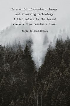 Humanity Quotes & Nature Peace Quotes for Your Soul   Mom Soul Soothers Tree Quotes, Trees Quotes Nature, Love Nature Quotes, Human Nature Quotes, Peaceful Quotes, Forest Quotes, Quotes About Forest, Into The Woods Quotes, Humanity Quotes