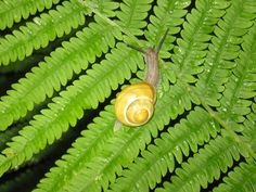 Escargot - Vacances à Kinnear's Mills - Snail - Holiday in Kinnear's Mills  http://rental.duproprio.com/cottage-for-rent-kinnears-mills-quebec-province-54244