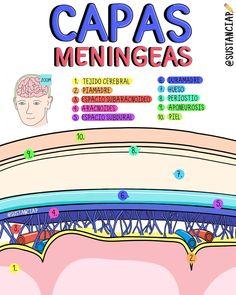 Medicine Notes, Medicine Student, Science Biology, Teaching Biology, Med Student, Student Studying, Nursing Procedures, Studying Medicine, Medical Anatomy