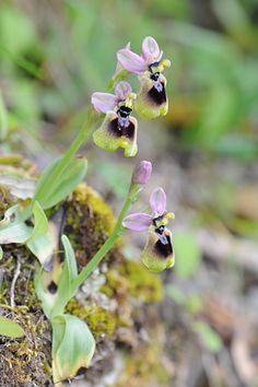 entretien des orchid es savoir tout sur ces fleurs exotiques orchid e cymbidium orchid es. Black Bedroom Furniture Sets. Home Design Ideas