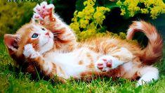Coaching, Ursula, Corgi, Cats, Blog, Animals, Training, Corgis, Gatos