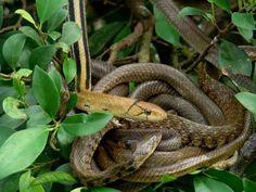 Способы избавиться от змей на участке | Дача - впрок