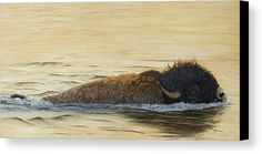 Giclee paper & canvas prints of my original oil painting of a buffalo swimming across the river .by Johanna Lerwick Wildlife / Nature Artist Several sizes available. Original Artwork, Original Paintings, Canvas Art, Canvas Prints, Nature Artists, Wildlife Nature, Nature Paintings, Local Artists, Fine Art America