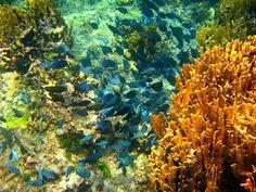 El Acuario - San Andrés Islas, Colombia, una experiencia inolvidable!  http://www.sanandresislas.com.co/el-acuario-san-andres