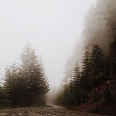 and Whiskey Please — simply-divine-creation: Eric Kimberlin Bowley Pretty Landscapes, Foggy Forest, Wild Nature, Fantasy Inspiration, Big Sky, Great Pictures, Mists, Countryside, Natural Beauty