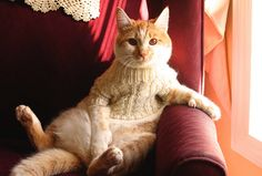 """""""I like this fisherman's sweater.  It suits me well. I need a martini now, please."""" - The Most Interesting Cat in the World."""
