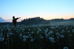 Have Faith In Me. Take me to a dandilion field and ill love you forever