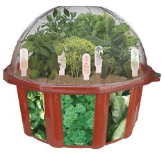 Dome Terrarium Home Growing Kit, Indoor Garden Herb Plants Seed Vegetables - the gardener at heart Indoor Garden, Indoor Plants, Culture D'herbes, Herb Garden Kit, Garden Ideas, Grow Kit, Growing Gardens, Gourmet Cooking, Herb Pots
