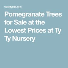 Pomegranate Trees for Sale at the Lowest Prices at Ty Ty Nursery