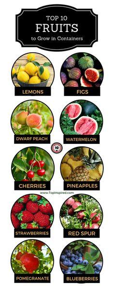 Ideas diy garden indoor fruit trees for 2019 Diy Garden, Fruit Garden, Garden Trees, Edible Garden, Garden Landscaping, Garden Pallet, Garden Pond, Garden Plants, Growing Tree