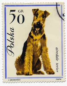 "love airedales, this is so the look of ""What"" you want me :-)"