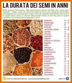 La durata dei semi in anni Go Green, Things To Know, Vegetable Garden, Dog Food Recipes, Flora, Seeds, Nutrition, Vegetables, Home