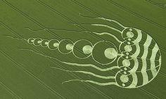 Jellyfish crop circle