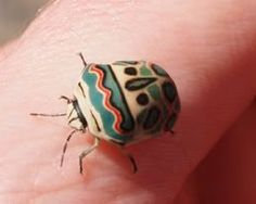 The Picasso Bug : The incredible insect looks like its been hand-painted by an…