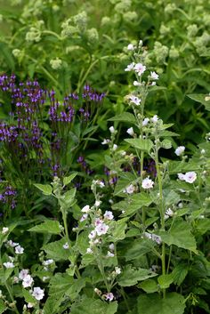 9 Tips for Planning the Herb Garden of Your Dreams - wetland medicinals (mashmallow, blue vervain and boneset) Garden Plants Vegetable, Herb Garden, Edible Plants, Edible Garden, Simple Flowers, Pretty Flowers, Herbal Medicine, Natural Medicine, My Secret Garden