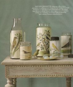 Decorating with Birds: Ideas from Martha Stewart Living - clear jars display artwork, in this case, beautiful antique bird prints