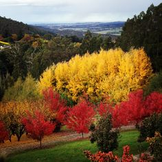 Mt Macedon, Melbourne, Australia.  This is the beautiful view from my dear friends house I was staying at a few weeks ago for a photo shoot, love being in the country.  Love Therese xx