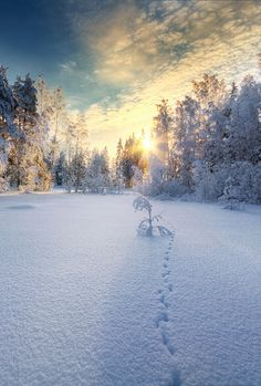 A beautiful winter sunset in Kerava, Finland, by Mikko Lagerstedt, on 500px.