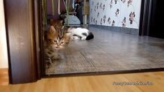 Poor kitten just wanted to play by DamnYouVodka cats kitten catsonweb cute adorable funny sleepy animals nature kitty cutie ca